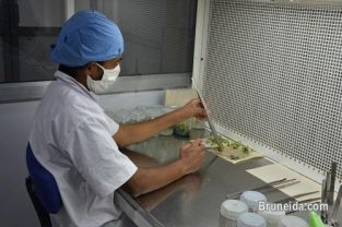 Hands on Training of Plant Tissue Culture