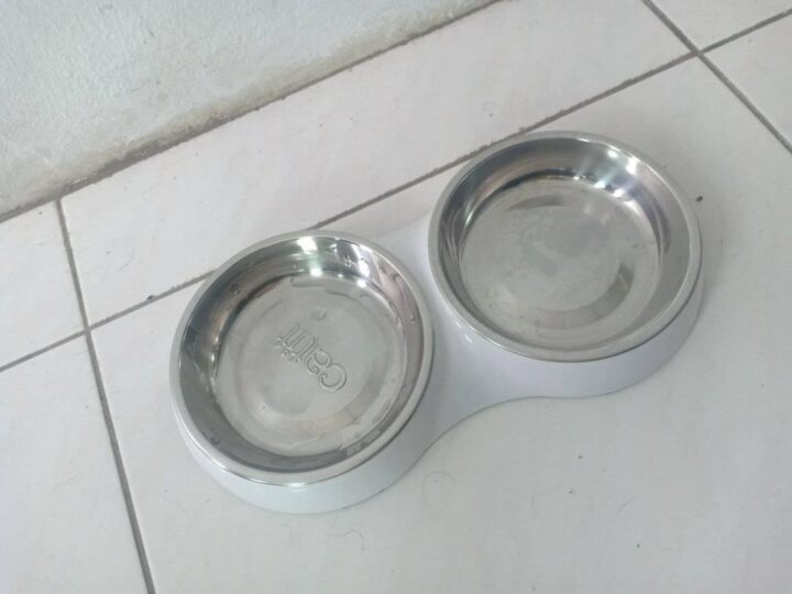 Cat things for sale