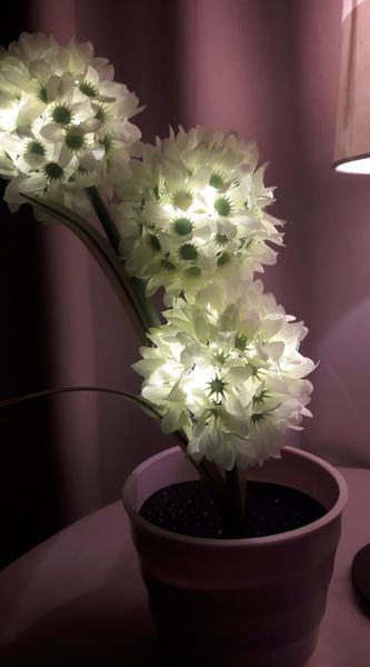 NEW unique flowers with Lights
