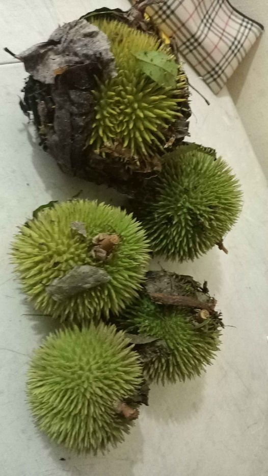 durian local