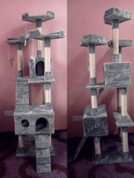 Cats Play House